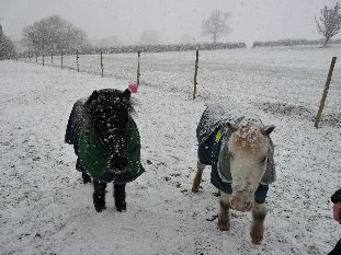 Tom and Ollie in the snow 1