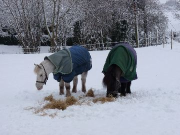 Tom and Ollie in the Snow 3